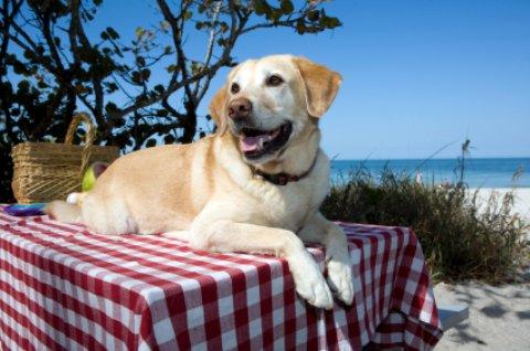 dog friendly beaches yellow labrador