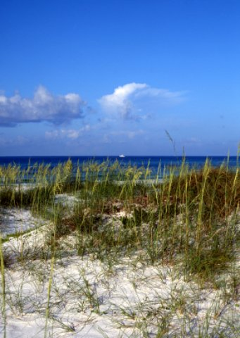 Grayton Beach Florida Scene