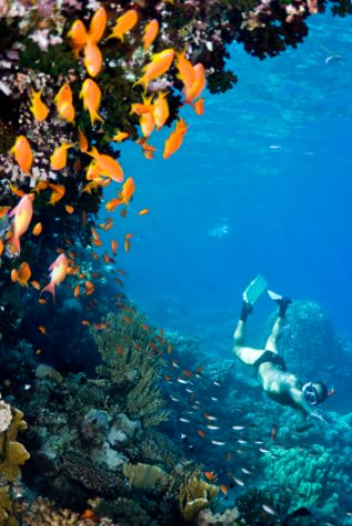 Deerfield Beach snorkeler among orange coral