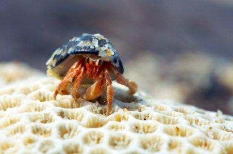 Hermit Crab on Fort Pierce State Park