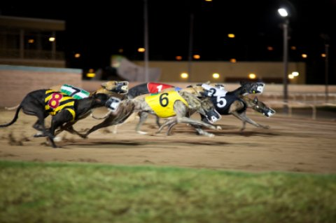 Melbourne Beach Florida at Greyhound Park with racing greyhounds