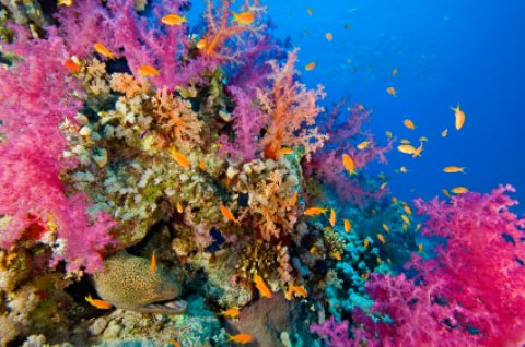 Neptune pink coral and sea life