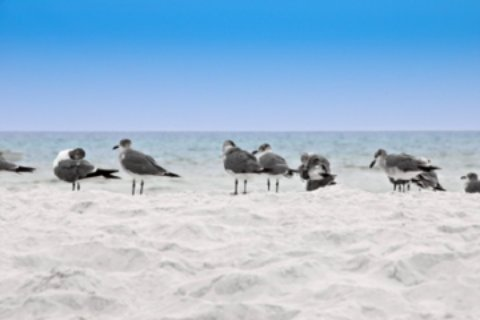 st george island state park beach and sea gulls