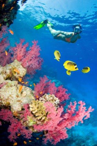 Snorkeling Florida: Girl in pink coral