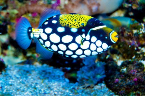 john pennekamp tropical fish