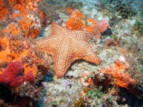 Marathan FL orange starfish and coral