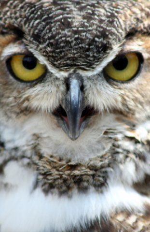 New Port Richey Owl