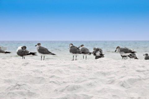 Pensacola beach with bird visitors