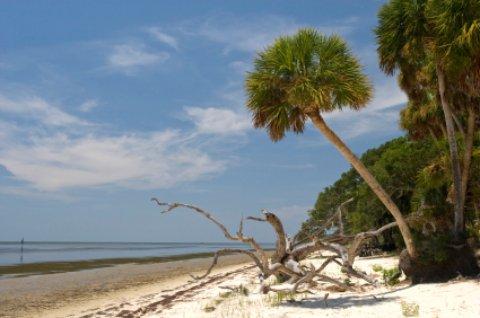 Savannas palm and driftwood