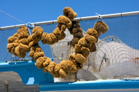 A boat load of sponges in Tarpon Springs Florida