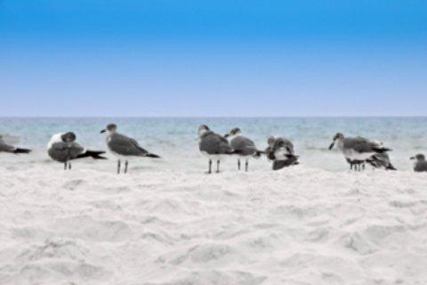 st george island state park beach and sea gulls