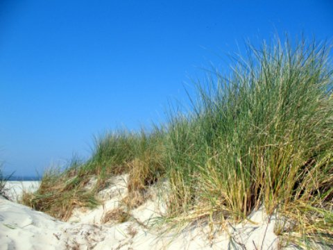 large sand dune at topsail state park